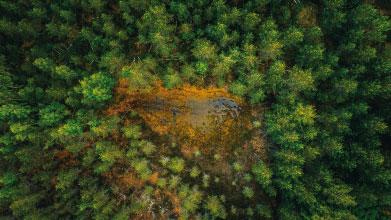 Biomasa como fuente de energía
